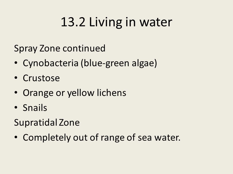 13.2 Living in water Spray Zone continued Cynobacteria (blue-green algae) Crustose Orange or yellow lichens Snails Supratidal Zone Completely out of r