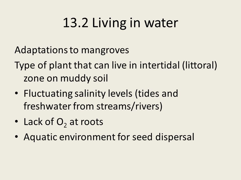Adaptations to mangroves Type of plant that can live in intertidal (littoral) zone on muddy soil Fluctuating salinity levels (tides and freshwater fro