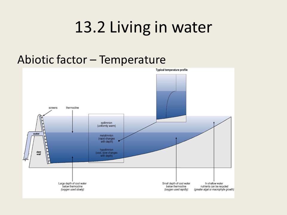 13.2 Living in water Intertidal (Littoral) Zone Herbivorous and carnivorous molluscs live amongst algae.