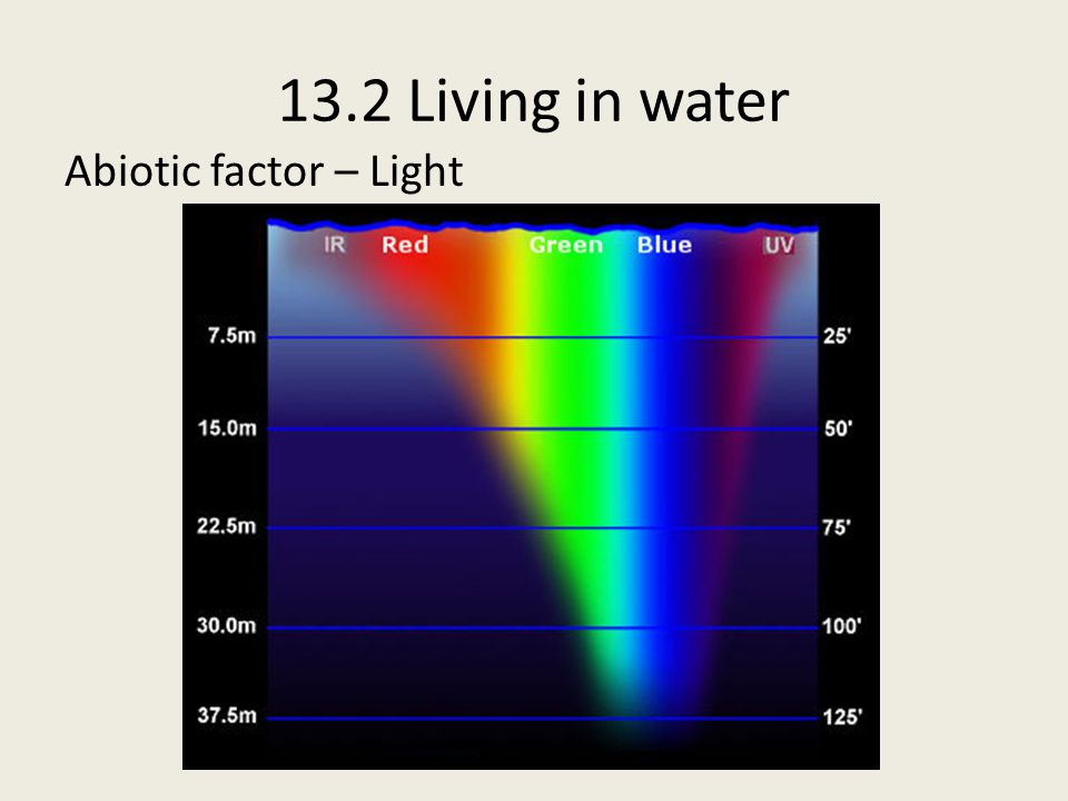 13.2 Living in water Spray Zone Receives spray and splashes of water Intense exposure to sunlight, evaporating water and concentrating salt Extreme variations in temperature (day - night) Few organisms live here Tolerant of dry conditions