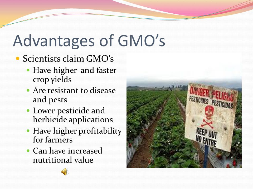 In the early 1990's GMO foods became available