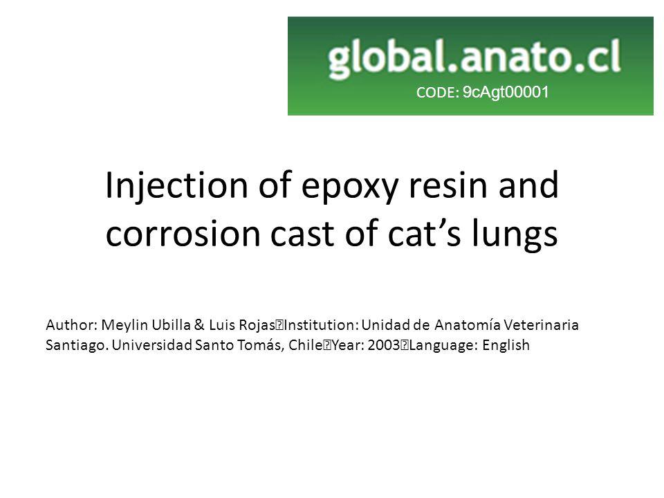 Injection of epoxy resin and corrosion cast of cat's lungs Author: Meylin Ubilla & Luis Rojas Institution: Unidad de Anatomía Veterinaria Santiago.