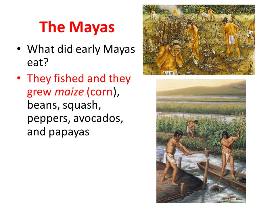 The Mayas What did early Mayas eat.
