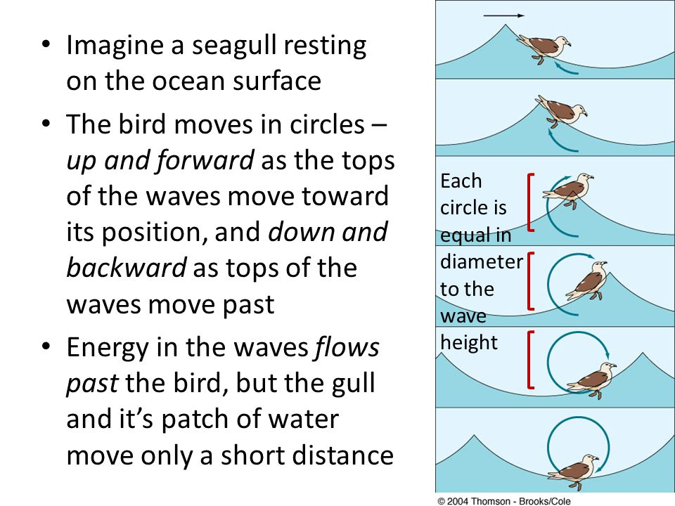 Imagine a seagull resting on the ocean surface The bird moves in circles – up and forward as the tops of the waves move toward its position, and down and backward as tops of the waves move past Energy in the waves flows past the bird, but the gull and it's patch of water move only a short distance Each circle is equal in diameter to the wave height