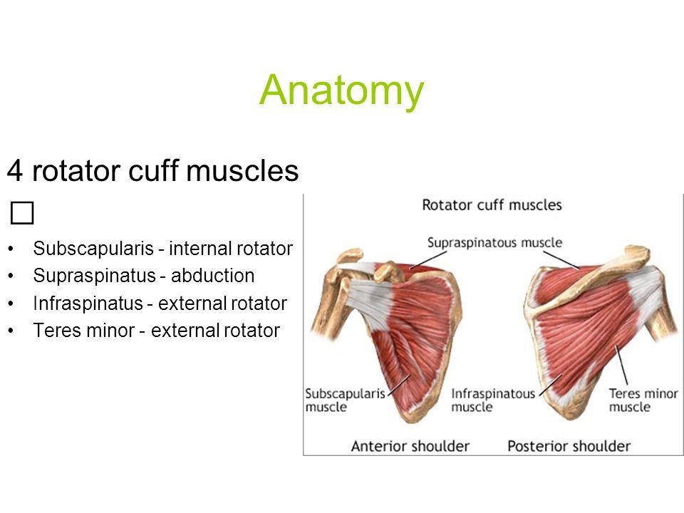 4 rotator cuff muscles Subscapularis - internal rotator Supraspinatus - abduction Infraspinatus - external rotator Teres minor - external rotator