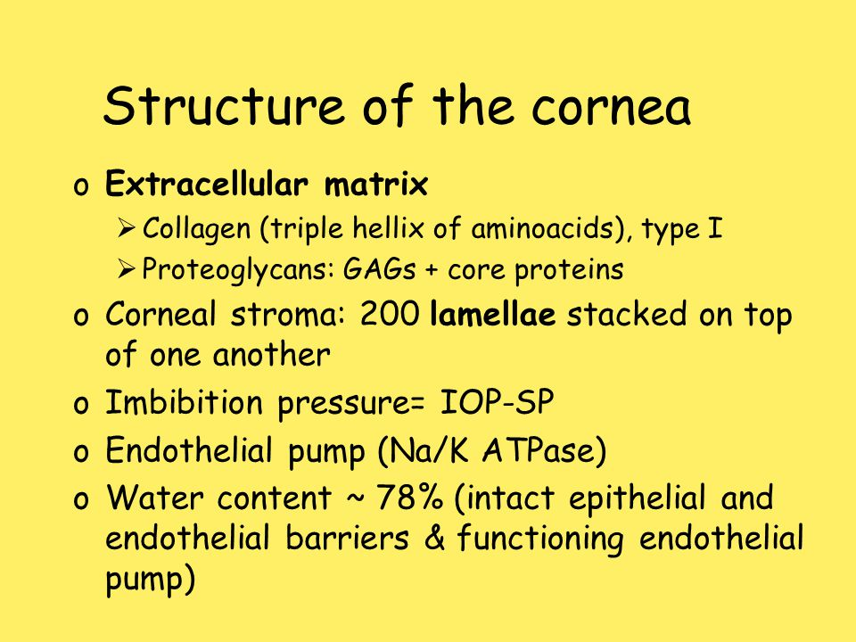 Structure of the cornea oExtracellular matrix  Collagen (triple hellix of aminoacids), type I  Proteoglycans: GAGs + core proteins oCorneal stroma:
