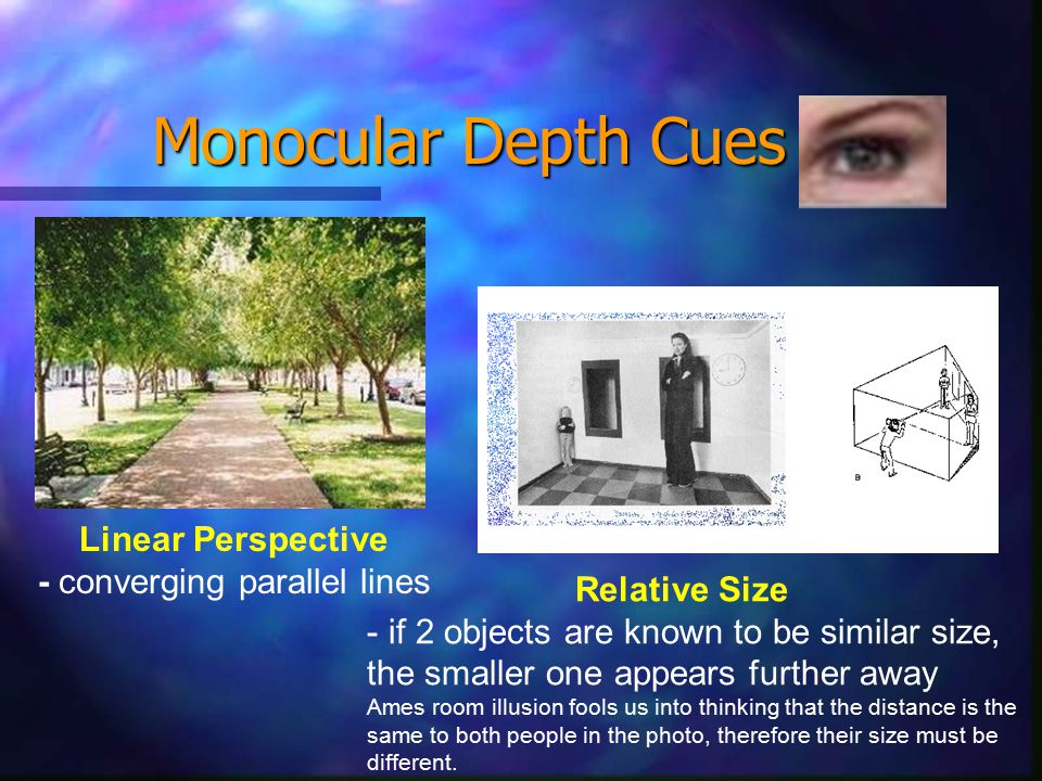Monocular Depth Cues Linear Perspective - converging parallel lines Relative Size - if 2 objects are known to be similar size, the smaller one appears further away Ames room illusion fools us into thinking that the distance is the same to both people in the photo, therefore their size must be different.