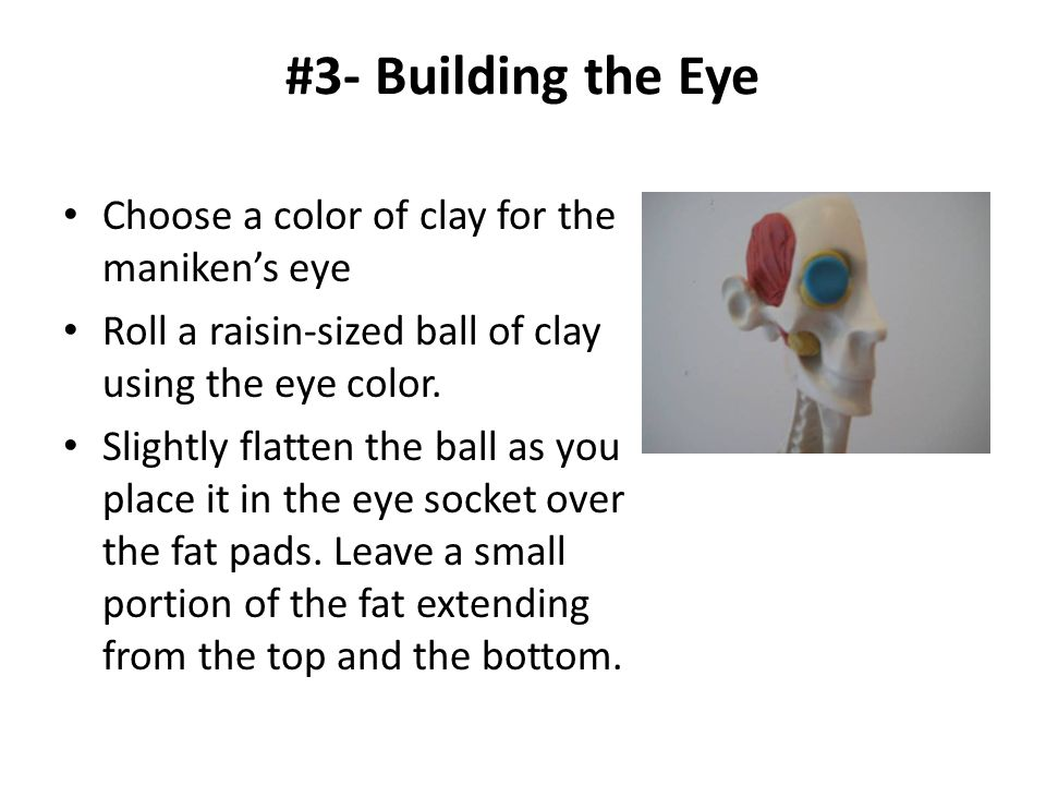 #3- Building the Eye Choose a color of clay for the maniken's eye Roll a raisin-sized ball of clay using the eye color. Slightly flatten the ball as y