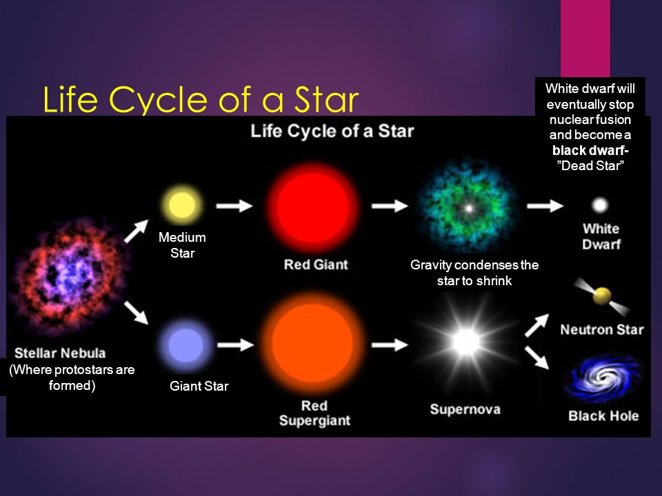 Life Cycle of a Star Medium Star Gravity condenses the star to shrink Giant Star (Where protostars are formed) White dwarf will eventually stop nuclea