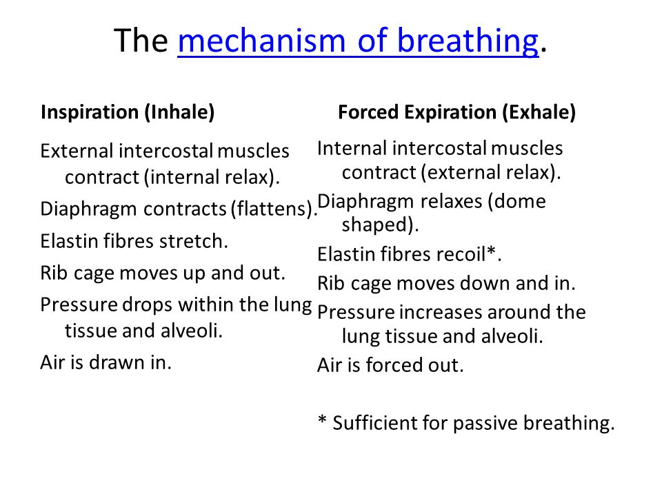 The mechanism of breathing.mechanism of breathing Inspiration (Inhale) External intercostal muscles contract (internal relax).