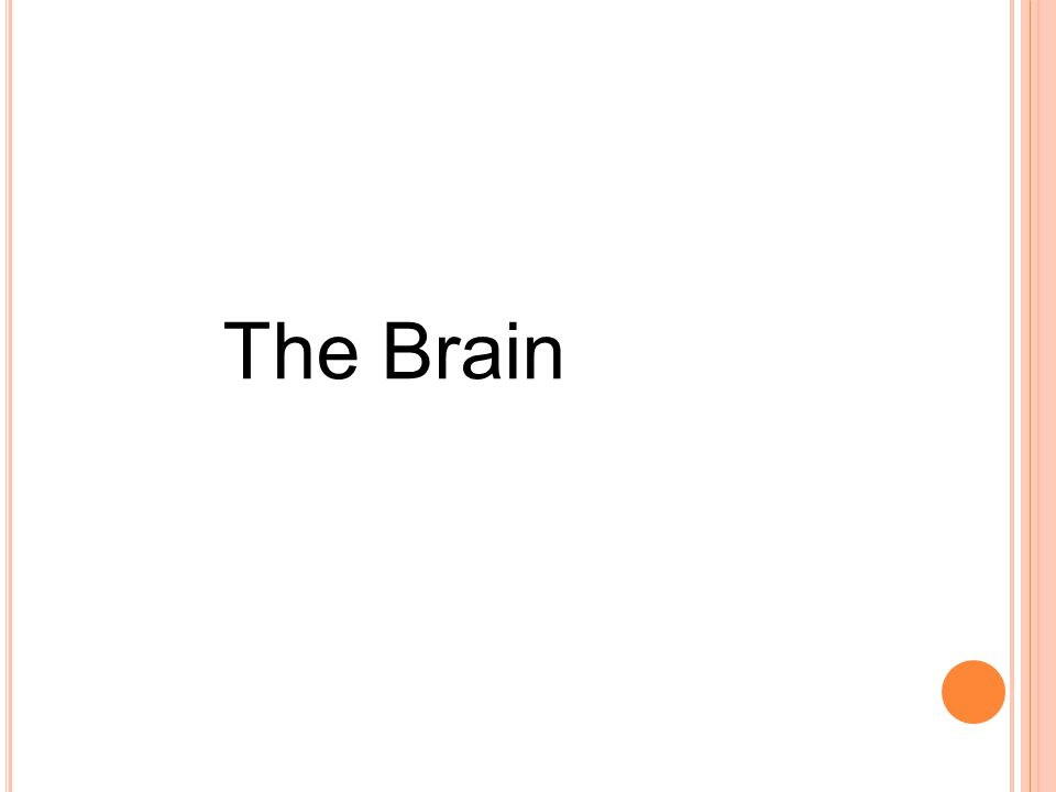T HE D IVIDED B RAIN A great number of brain functions, such as primary motor and association areas, are located in both the right and left cerebral hemispheres.