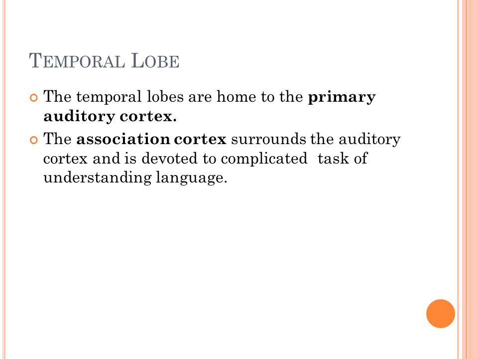 T EMPORAL L OBE The temporal lobes are home to the primary auditory cortex. The association cortex surrounds the auditory cortex and is devoted to com