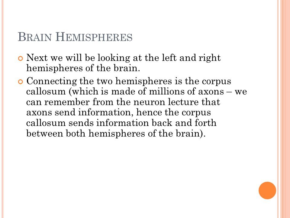 B RAIN H EMISPHERES Next we will be looking at the left and right hemispheres of the brain.