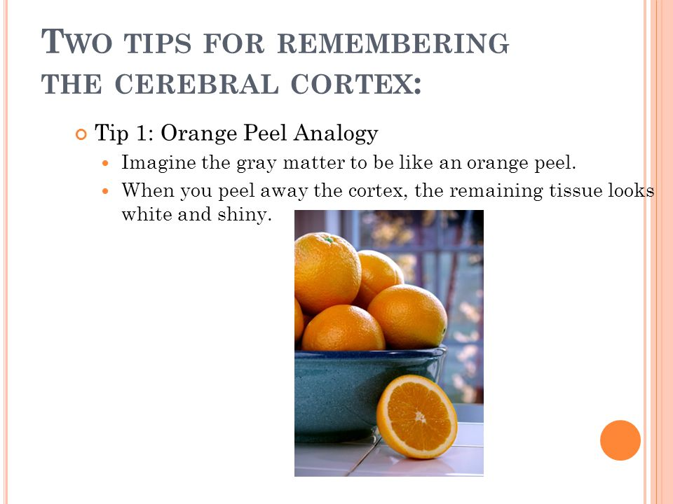 T WO TIPS FOR REMEMBERING THE CEREBRAL CORTEX : Tip 1: Orange Peel Analogy Imagine the gray matter to be like an orange peel.