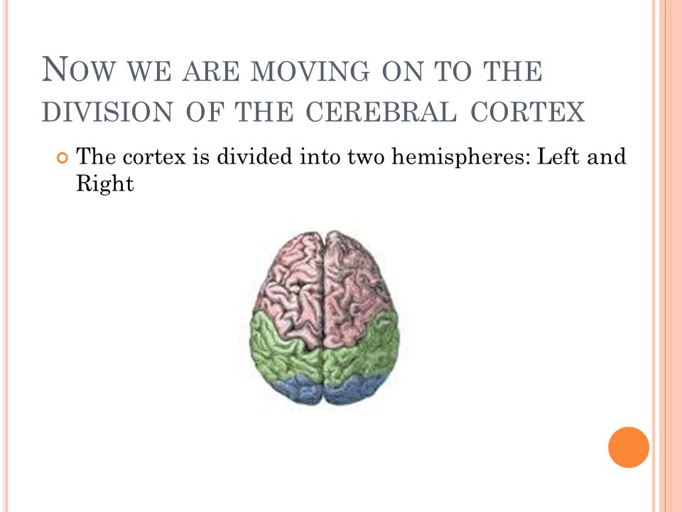 N OW WE ARE MOVING ON TO THE DIVISION OF THE CEREBRAL CORTEX The cortex is divided into two hemispheres: Left and Right