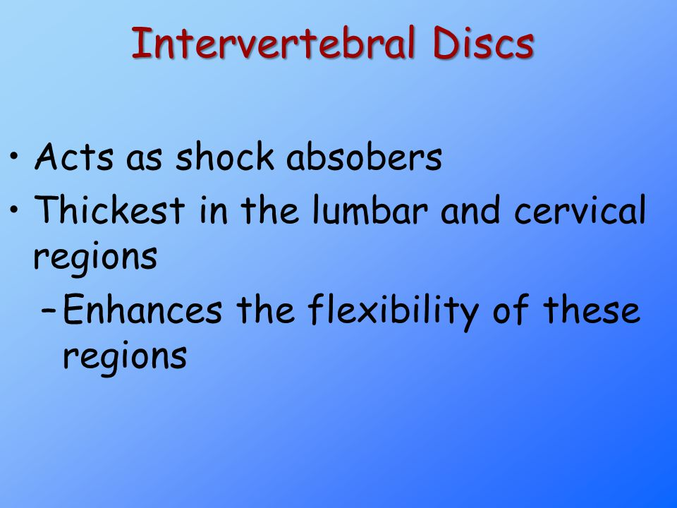 Intervertebral Discs Acts as shock absobers Thickest in the lumbar and cervical regions –Enhances the flexibility of these regions