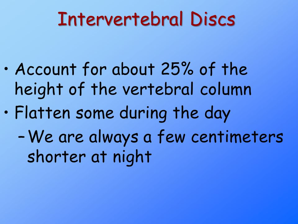 Intervertebral Discs Account for about 25% of the height of the vertebral column Flatten some during the day –We are always a few centimeters shorter