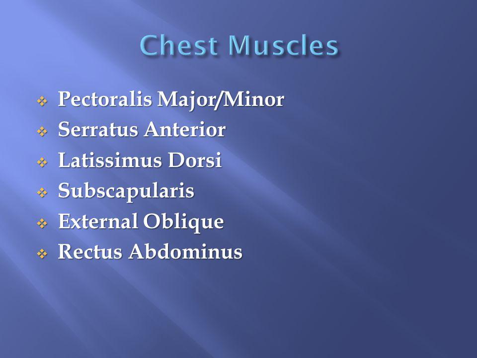  Pectoralis Major/Minor  Serratus Anterior  Latissimus Dorsi  Subscapularis  External Oblique  Rectus Abdominus