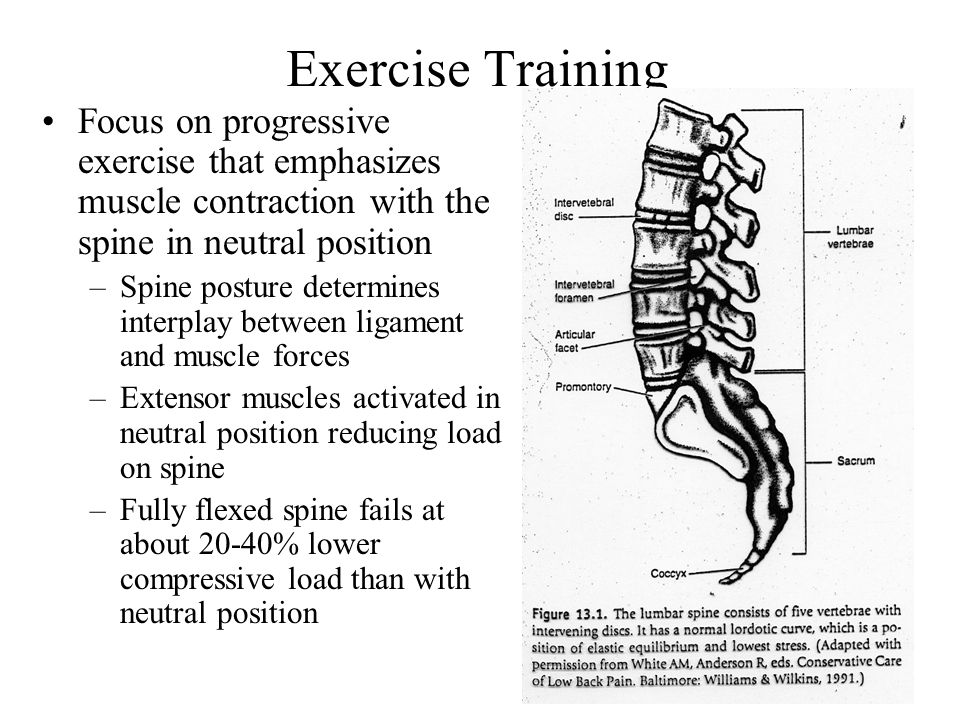 18 Exercise Training Focus on progressive exercise that emphasizes muscle contraction with the spine in neutral position –Spine posture determines interplay between ligament and muscle forces –Extensor muscles activated in neutral position reducing load on spine –Fully flexed spine fails at about 20-40% lower compressive load than with neutral position