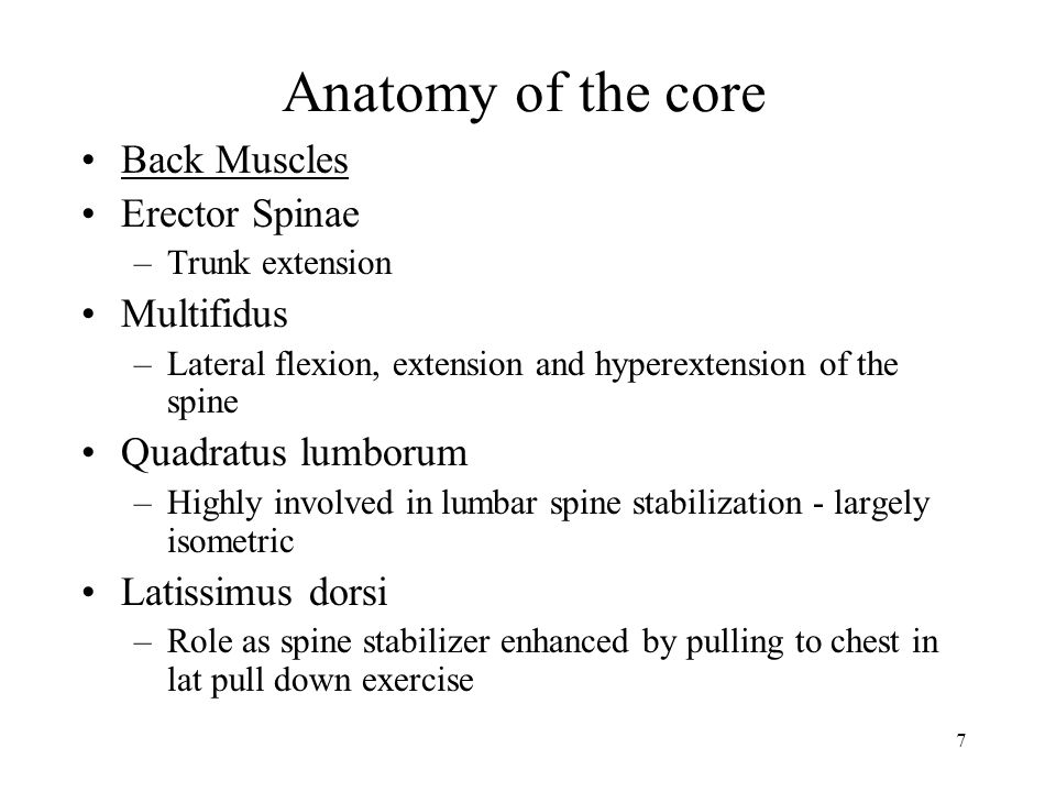 7 Anatomy of the core Back Muscles Erector Spinae –Trunk extension Multifidus –Lateral flexion, extension and hyperextension of the spine Quadratus lumborum –Highly involved in lumbar spine stabilization - largely isometric Latissimus dorsi –Role as spine stabilizer enhanced by pulling to chest in lat pull down exercise