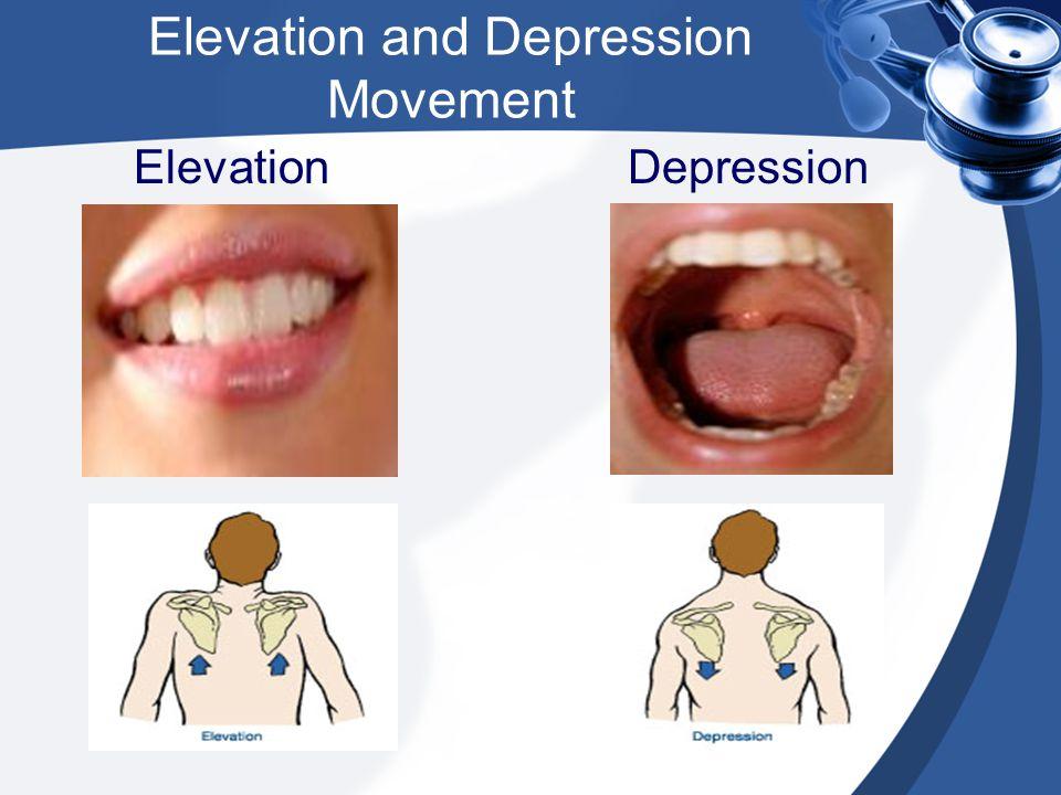Elevation and Depression Movement Elevation Depression