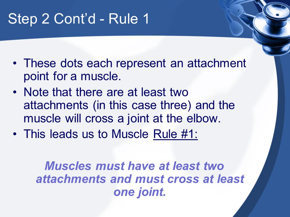 Step 2 Cont'd - Rule 1 These dots each represent an attachment point for a muscle. Note that there are at least two attachments (in this case three) a