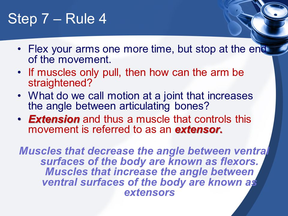 Step 7 – Rule 4 Flex your arms one more time, but stop at the end of the movement. If muscles only pull, then how can the arm be straightened? What do