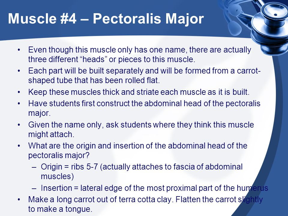 """Muscle #4 – Pectoralis Major Even though this muscle only has one name, there are actually three different """"heads"""" or pieces to this muscle. Each part"""