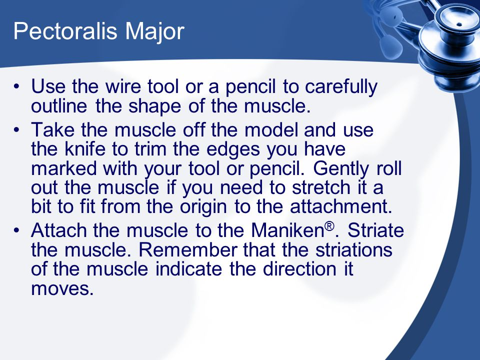 Pectoralis Major Use the wire tool or a pencil to carefully outline the shape of the muscle. Take the muscle off the model and use the knife to trim t