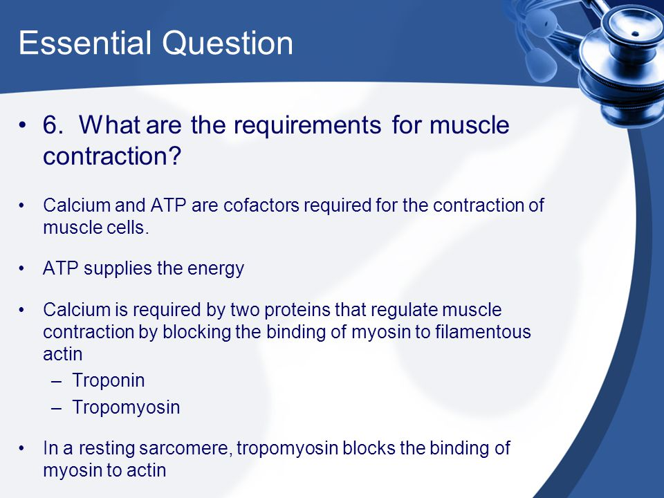 Essential Question 6. What are the requirements for muscle contraction? Calcium and ATP are cofactors required for the contraction of muscle cells. AT