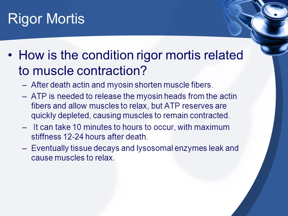 How is the condition rigor mortis related to muscle contraction? –After death actin and myosin shorten muscle fibers. –ATP is needed to release the my