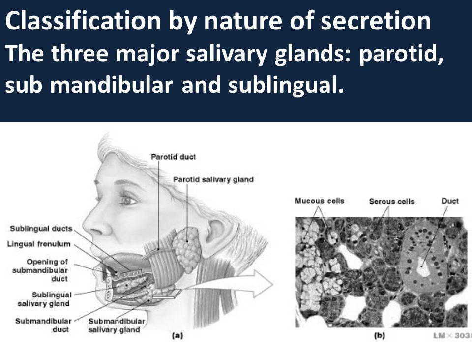 Classification by nature of secretion The three major salivary glands: parotid, sub mandibular and sublingual.