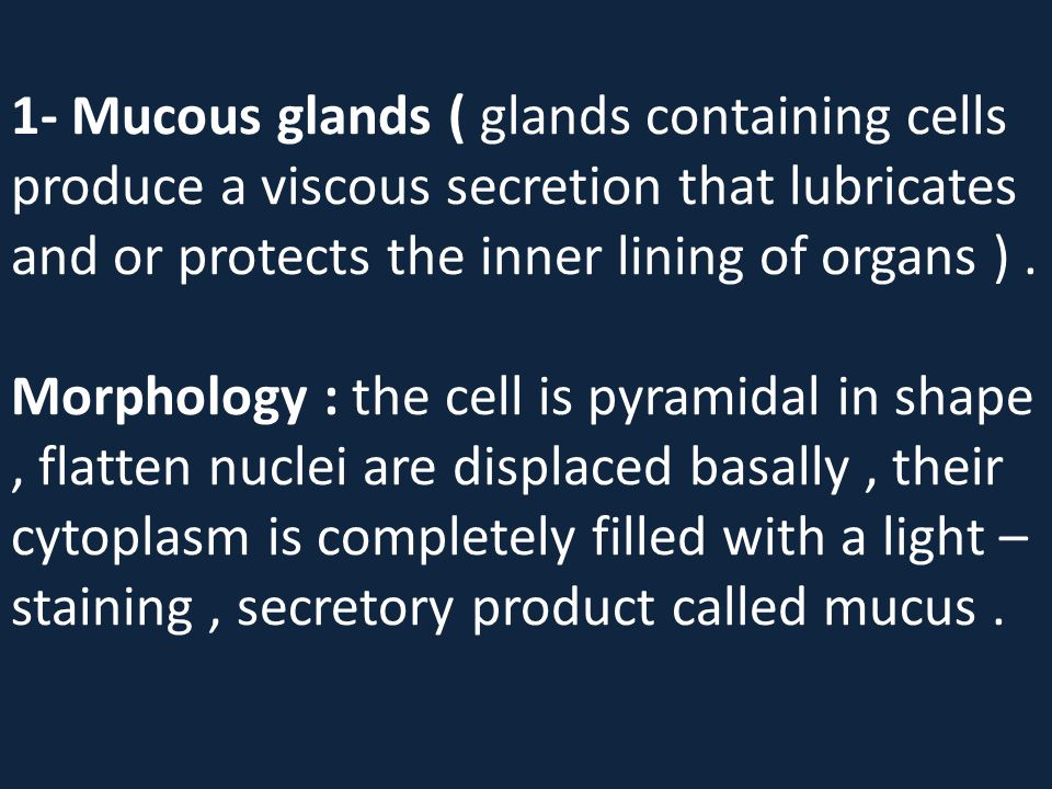 1- Mucous glands ( glands containing cells produce a viscous secretion that lubricates and or protects the inner lining of organs ). Morphology : the