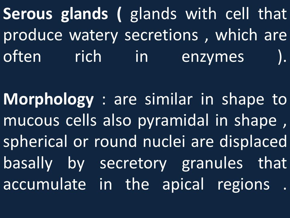 Serous glands ( glands with cell that produce watery secretions, which are often rich in enzymes ). Morphology : are similar in shape to mucous cells