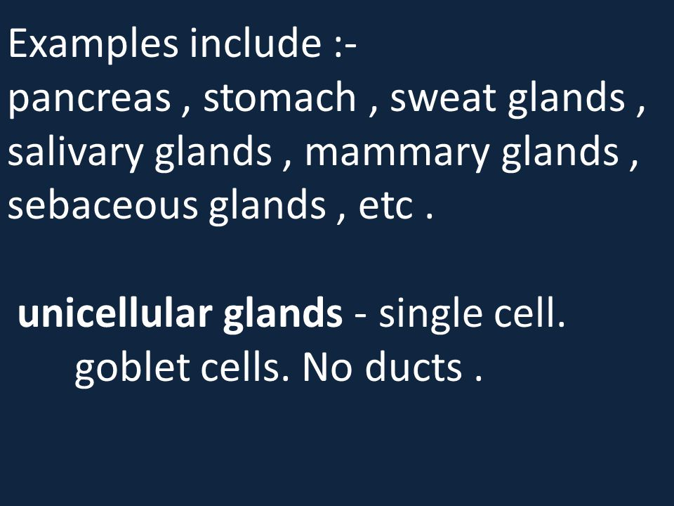 Examples include :- pancreas, stomach, sweat glands, salivary glands, mammary glands, sebaceous glands, etc. unicellular glands - single cell. goblet