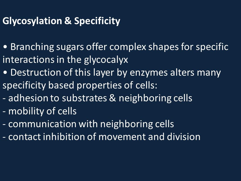 Glycosylation & Specificity Branching sugars offer complex shapes for specific interactions in the glycocalyx Destruction of this layer by enzymes alt