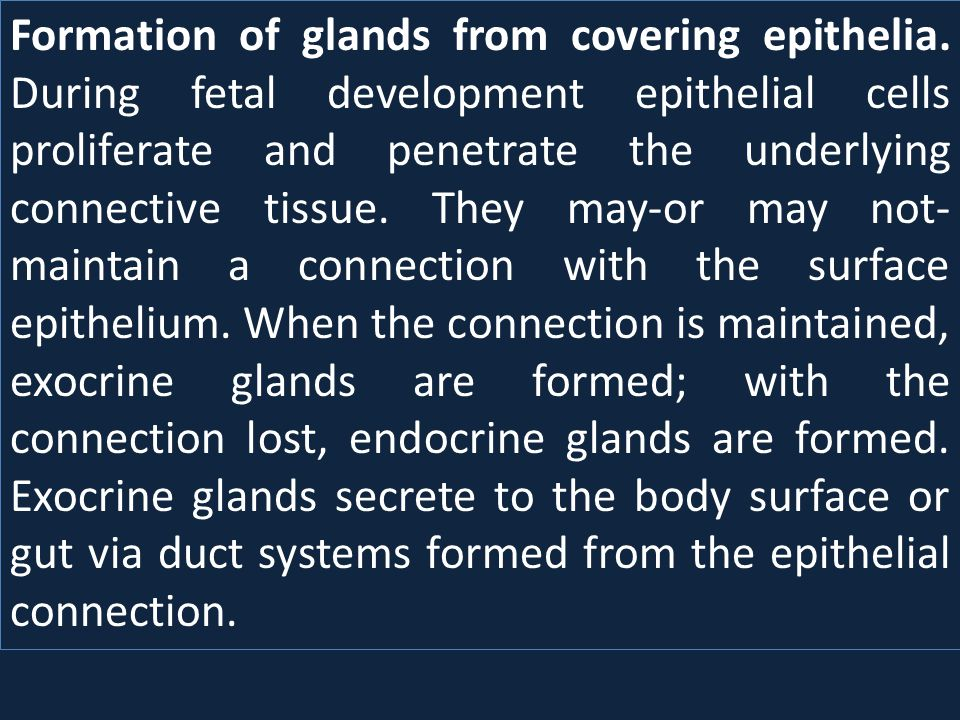 Formation of glands from covering epithelia. During fetal development epithelial cells proliferate and penetrate the underlying connective tissue. The