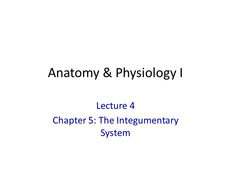 Anatomy & Physiology I Lecture 4 Chapter 5: The Integumentary System