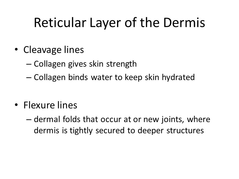 Reticular Layer of the Dermis Cleavage lines – Collagen gives skin strength – Collagen binds water to keep skin hydrated Flexure lines – dermal folds
