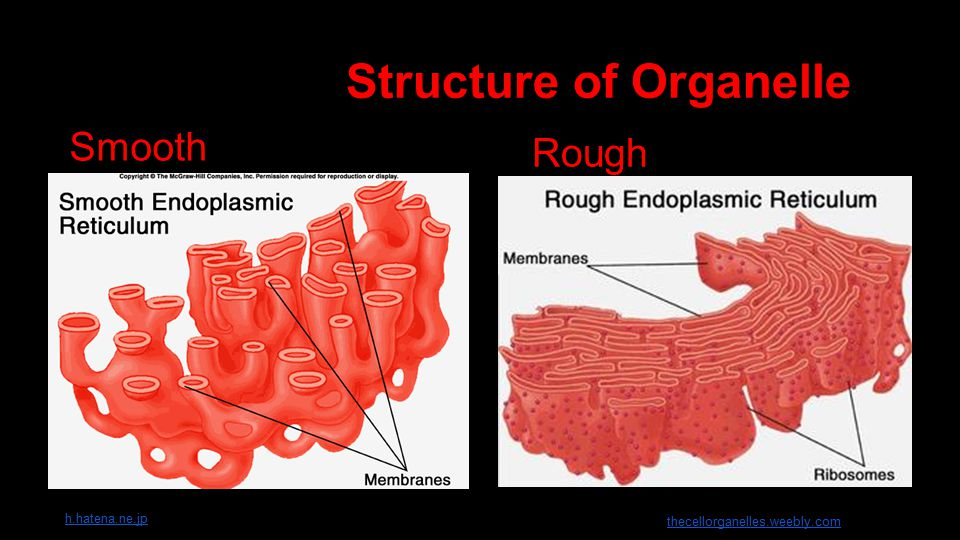 Structure of Organelle Smooth R Rough h.hatena.ne.jp thecellorganelles.weebly.com