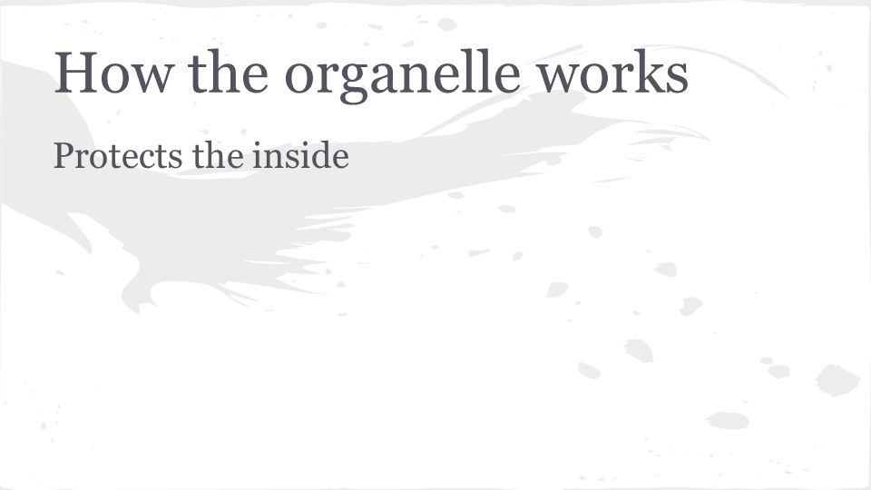How the organelle works Protects the inside
