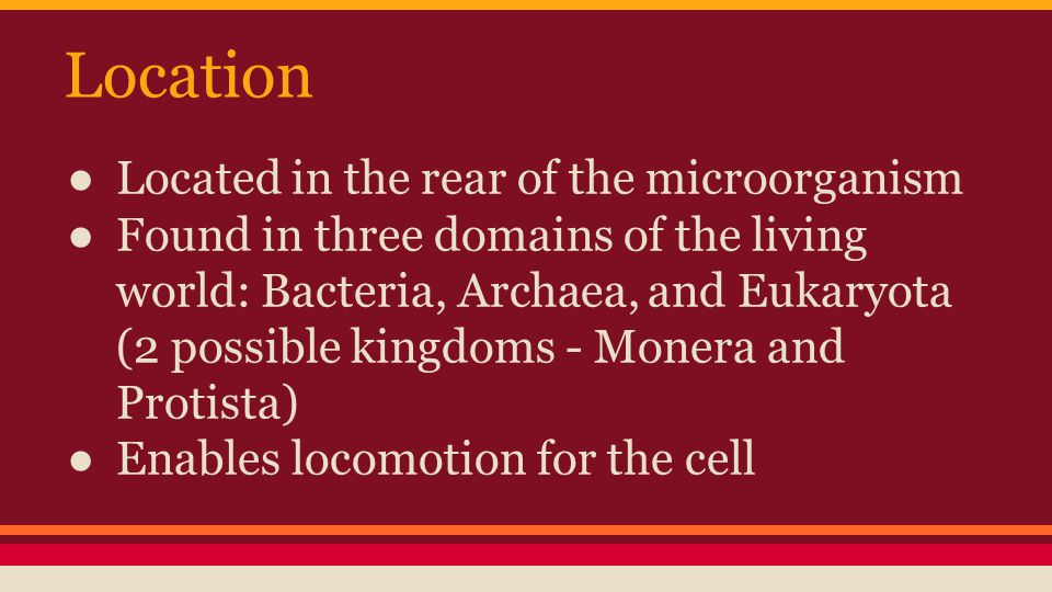 Location ● Located in the rear of the microorganism ● Found in three domains of the living world: Bacteria, Archaea, and Eukaryota (2 possible kingdoms - Monera and Protista) ● Enables locomotion for the cell