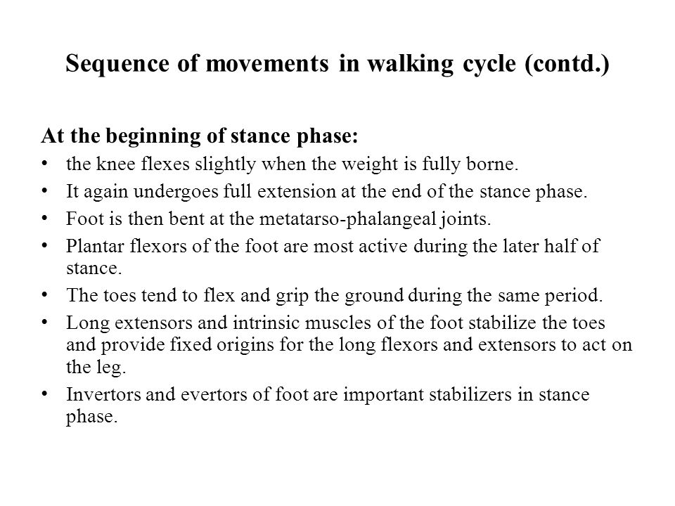 Sequence of movements in walking cycle (contd.) At the beginning of stance phase: the knee flexes slightly when the weight is fully borne.