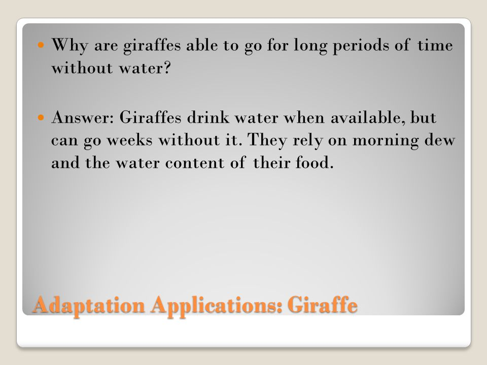 Adaptation Applications: Giraffe Why are giraffes able to go for long periods of time without water.