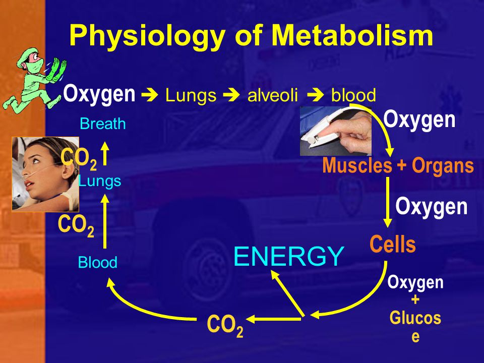 Oxygen  Lungs  alveoli  blood Muscles + Organs Oxygen Cells Oxygen + Glucos e ENERGY CO 2 Blood Lungs CO 2 Breath CO 2 Physiology of Metabolism