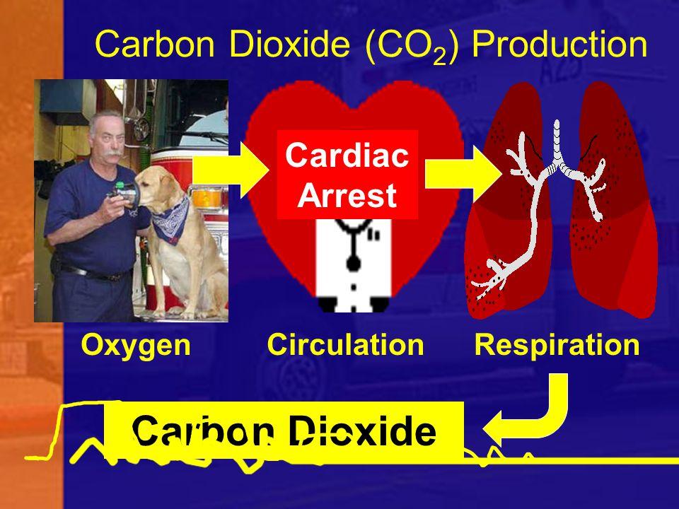 Carbon Dioxide (CO 2 ) Production Oxygen Circulation Respiration Carbon Dioxide Cardiac Arrest