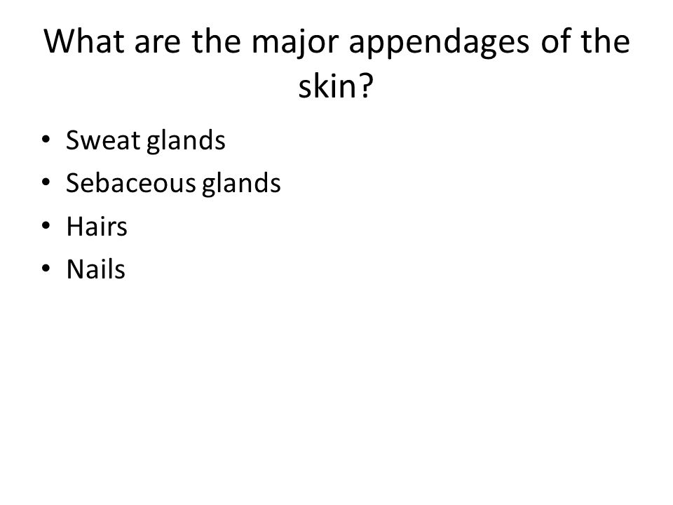 Skin Appendages and Integument Function