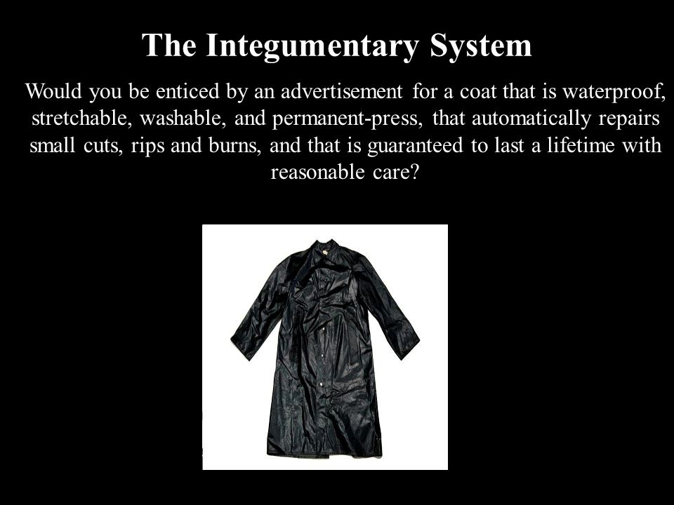 The Integumentary System Would you be enticed by an advertisement for a coat that is waterproof, stretchable, washable, and permanent-press, that auto