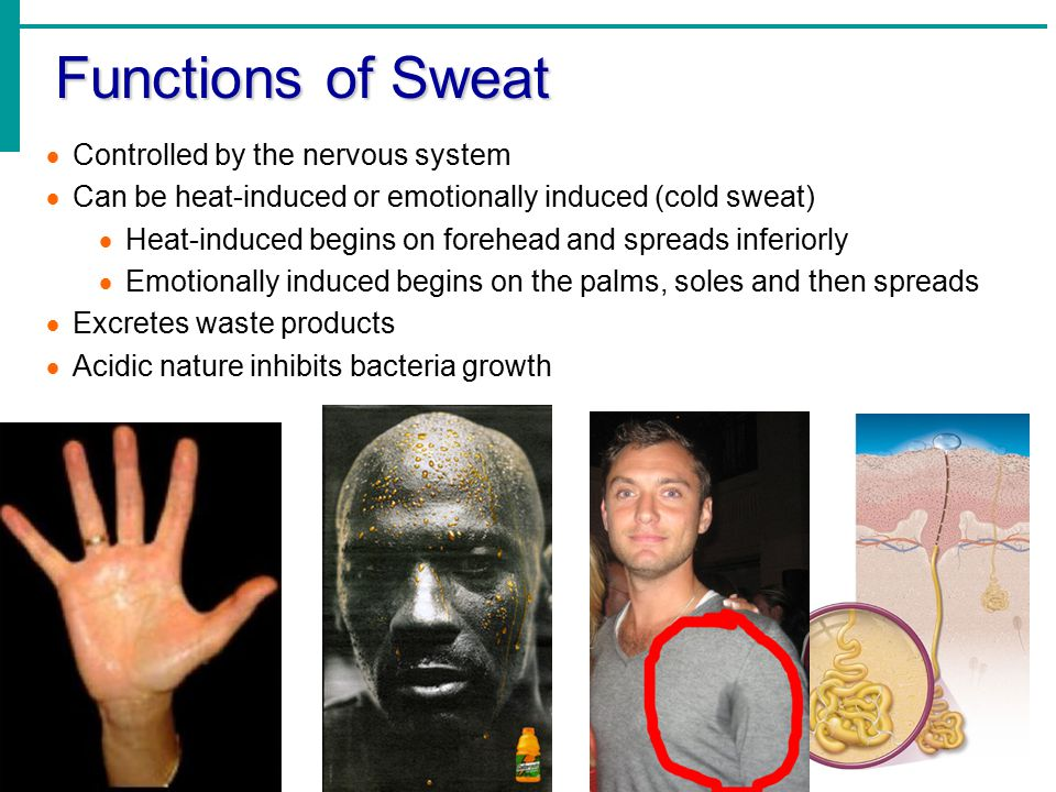 Functions of Sweat  Controlled by the nervous system  Can be heat-induced or emotionally induced (cold sweat)  Heat-induced begins on forehead and spreads inferiorly  Emotionally induced begins on the palms, soles and then spreads  Excretes waste products  Acidic nature inhibits bacteria growth