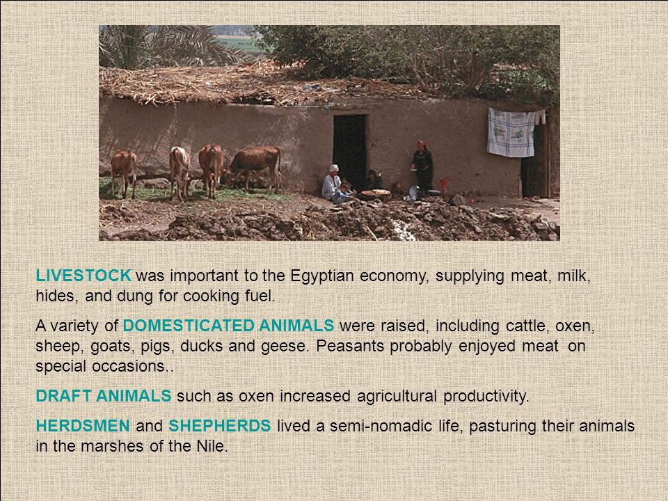 LIVESTOCK was important to the Egyptian economy, supplying meat, milk, hides, and dung for cooking fuel.